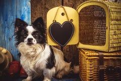 Pequeño perro listo por días de fiesta Imágenes de archivo libres de regalías