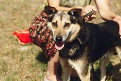 Pequeño perro marrón lindo del refugio con la lengua en la correa que presenta al ou Foto de archivo