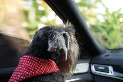 Pequeño perro mezclado negro de la raza que sonríe y que se sienta en el campo de flor foto de archivo