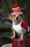 Pequeño perro mezclado tropical de la raza en el sombrero del reno de la cesta que lleva Imagen de archivo