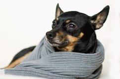 Pequeño perro negro Imágenes de archivo libres de regalías