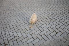 Pequeño perro para un paseo Otoño Imagenes de archivo
