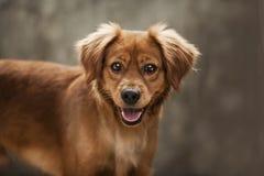 Pequeño perro Perrito pet canino canis mamíferos Cara Retrato Amante animal Amante del perro Tienda de animales Comida de animale imagen de archivo libre de regalías