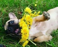 Pequeño perro que juega con las flores Imágenes de archivo libres de regalías