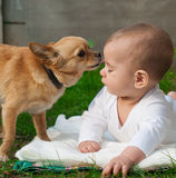 Pequeño perro que lame la cara del bebé que está mintiendo en hierba Fotos de archivo libres de regalías