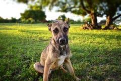 Pequeño perro que mira blando hacia la cámara foto de archivo libre de regalías