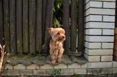 Pequeño perro que se coloca solamente foto de archivo