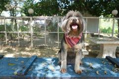 Pequeño perro que se sienta en piso azul con la sombra del árbol Foto de archivo