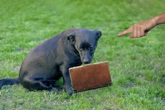 Pequeño perro triste expuesto en el tiempo de vacaciones fotografía de archivo