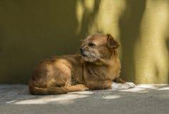 Pequeño perro viejo Fotos de archivo