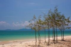 Pequeño pino en la playa Imagenes de archivo