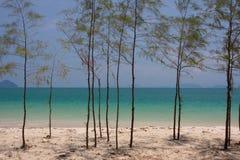 Pequeño pino en la playa Foto de archivo libre de regalías