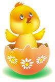 Pequeño pollo amarillo Fotografía de archivo libre de regalías