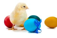 Pequeño pollo con los huevos de Pascua. aislado Fotografía de archivo