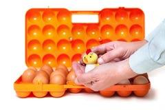 Pequeño pollo en fondo del envase de las manos con los huevos Fotos de archivo libres de regalías