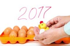 Pequeño pollo en fondo del envase de las manos con los huevos Fotos de archivo