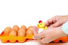 Pequeño pollo en fondo del envase de las manos con los huevos Fotografía de archivo