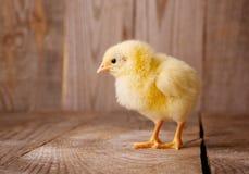 Pequeño pollo en un fondo de madera Fotos de archivo