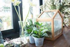 Pequeño pote de la planta exhibido al lado de la ventana Imagen de archivo