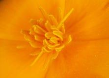 Pequeño primer anaranjado de la flor - fondo Imagen de archivo libre de regalías