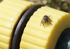 Pequeño primer de la araña Fotografía de archivo libre de regalías