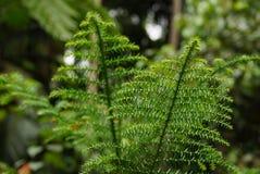 Pequeño primer verde de la naturaleza del árbol forestal Fotografía de archivo