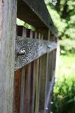 Pequeño puente viejo de madera en el río en un parque Foto de archivo libre de regalías