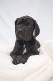 Pequeño punto blanco de mentira del cachorro Foto de archivo libre de regalías