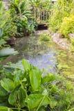 Pequeño río artificial en jardín Imágenes de archivo libres de regalías
