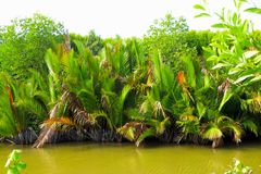 Pequeño río cerca de las plantas tropicales Fotografía de archivo