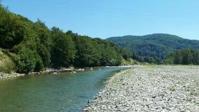 Pequeño río cerca del bosque, día soleado del verano metrajes