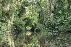 Pequeño río con la orilla denso enselvada en el parque nacional de Tortuguero, Costa Rica foto de archivo libre de regalías