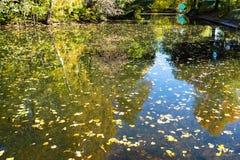 pequeño río con las hojas caidas en parque urbano imagenes de archivo