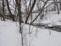 Pequeño río con los árboles en invierno foto de archivo libre de regalías