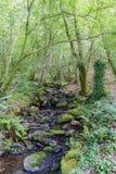 Pequeño río con muchas piedras con el musgo, en un bosque del roble con th Fotos de archivo libres de regalías