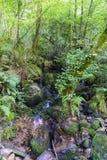 Pequeño río con muchas piedras con el musgo, en un bosque del roble con th Foto de archivo libre de regalías