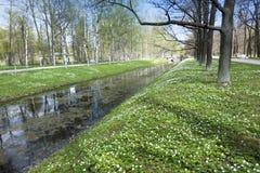 Pequeño río con una lenteja de agua, un canal en el parque, los abedules en costa y los snowdrops florecientes Fotos de archivo libres de regalías