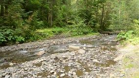 Pequeño río de la montaña con el bosque verde enorme en Cárpatos almacen de metraje de vídeo
