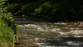 Pequeño río de la montaña con la vegetación verde en la orilla Corriente rápida del agua que fluye creando la espuma que burbujea metrajes