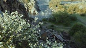 Pequeño río de la montaña Paisaje con la corriente que fluye entre las rocas Agua en montañas Rápidos del río almacen de video