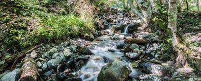 Pequeño río del bosque Foto de archivo libre de regalías
