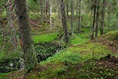 Pequeño río del bosque en bosque del piel-árbol Fotografía de archivo