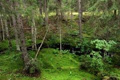 Pequeño río del bosque en bosque del piel-árbol Imagen de archivo libre de regalías