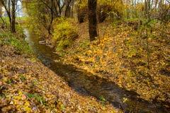 Pequeño río en bosque del otoño Imagen de archivo