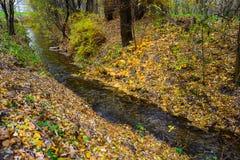 Pequeño río en bosque del otoño Foto de archivo