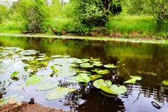 Pequeño río en el bosque Foto de archivo