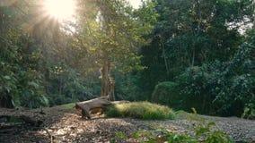 Pequeño río en la selva almacen de metraje de vídeo