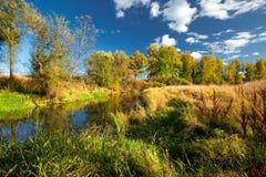 Pequeño río en un bosque Imagen de archivo