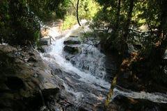 Pequeño río que atraviesa la selva Imágenes de archivo libres de regalías