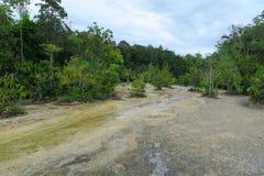 Pequeño río que fluye en el bosque Foto de archivo libre de regalías